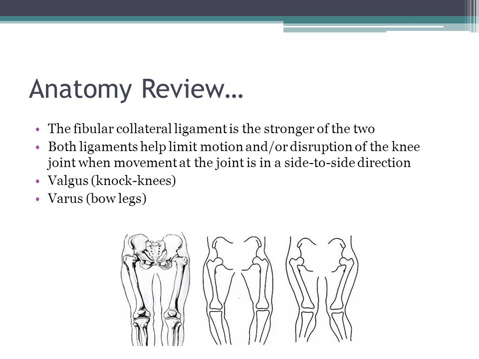 Anatomy Review… The fibular collateral ligament is the stronger of the two.