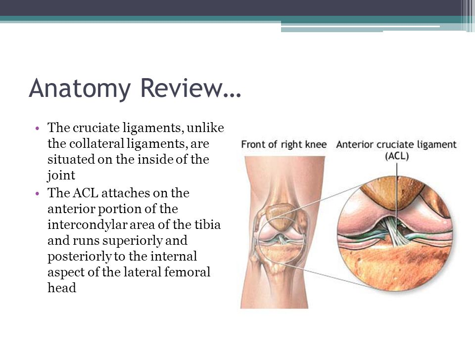 Anatomy Review… The cruciate ligaments, unlike the collateral ligaments, are situated on the inside of the joint.