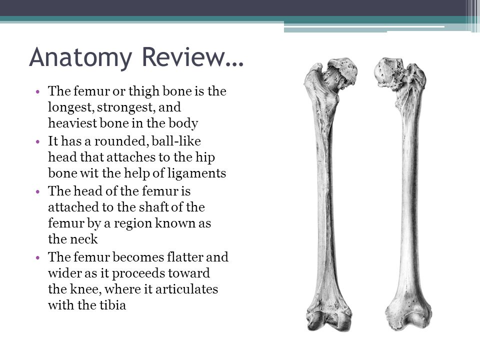 Anatomy Review… The femur or thigh bone is the longest, strongest, and heaviest bone in the body.