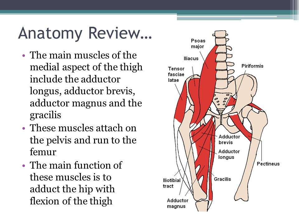 Anatomy Review…