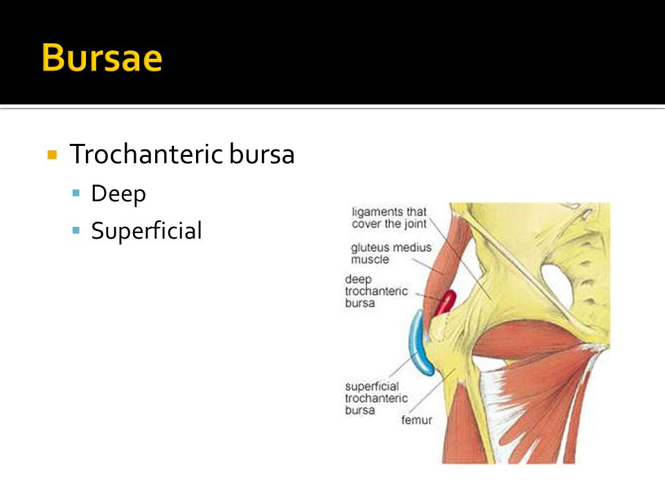Bursae Trochanteric bursa Deep Superficial