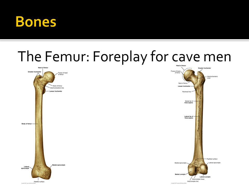 The Femur: Foreplay for cave men