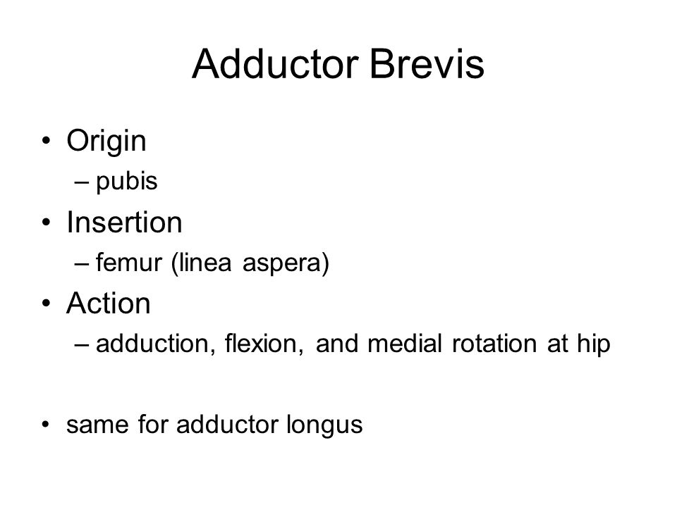 Adductor Brevis Origin Insertion Action pubis femur (linea aspera)