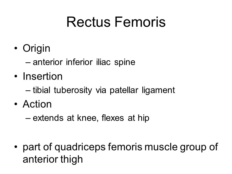 Rectus Femoris Origin Insertion Action