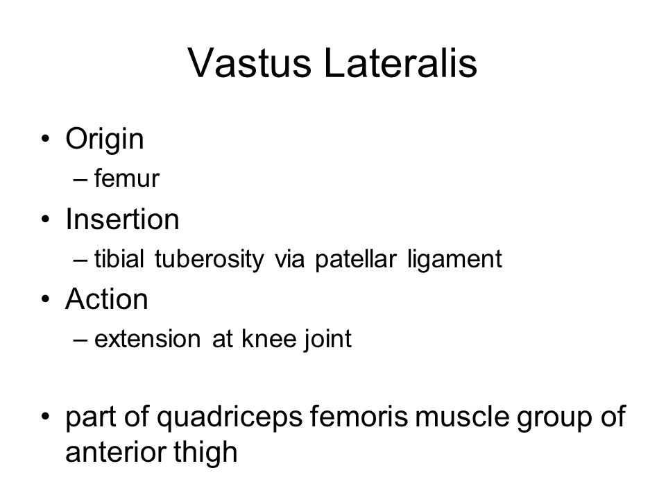 Vastus Lateralis Origin Insertion Action