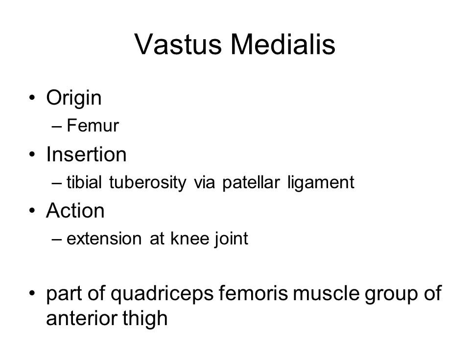 Vastus Medialis Origin Insertion Action