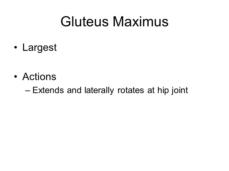 Gluteus Maximus Largest Actions