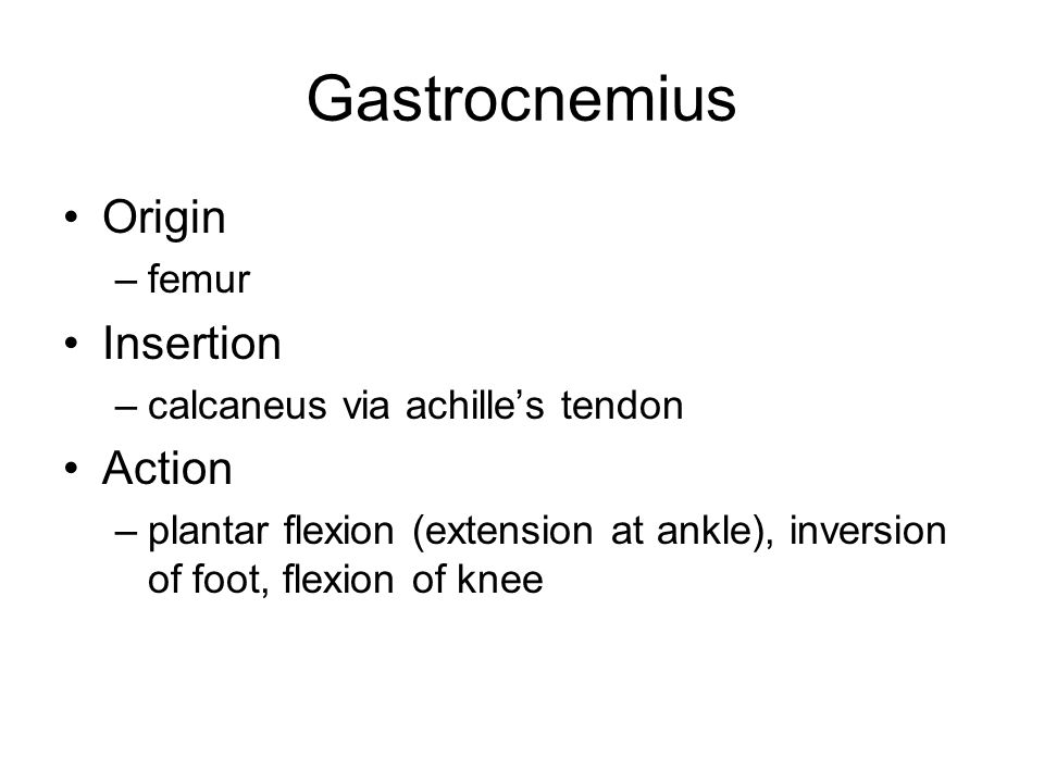 Gastrocnemius Origin Insertion Action femur