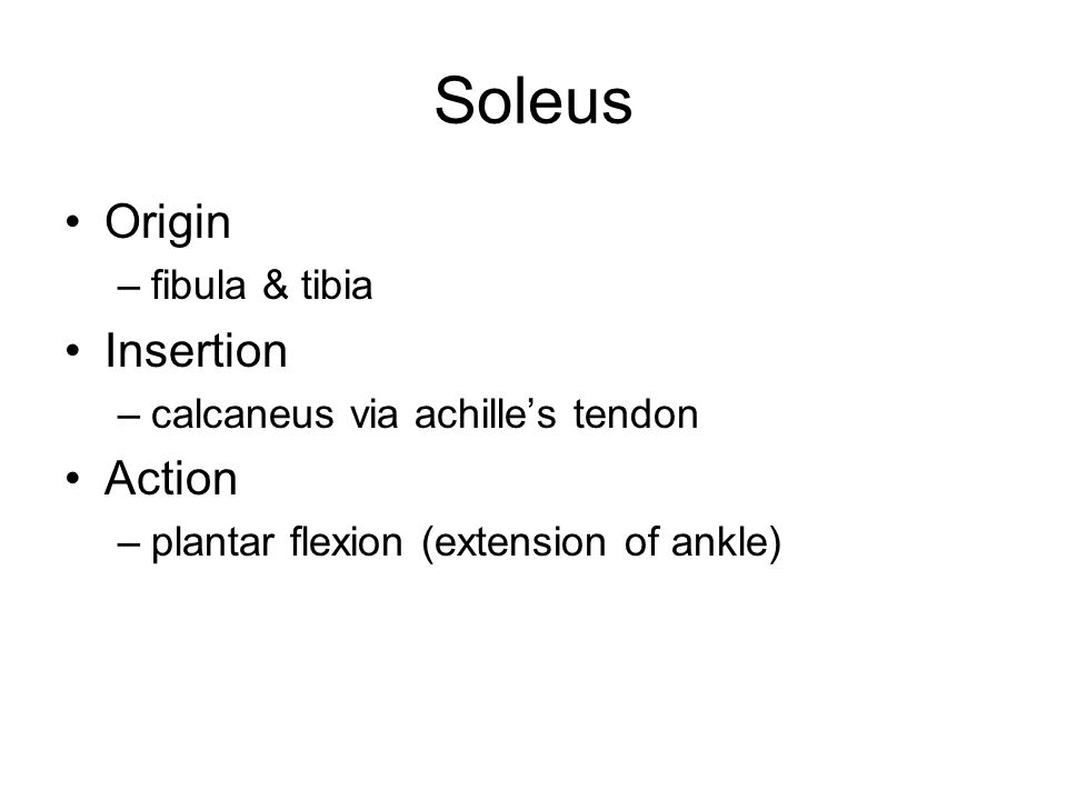 Soleus Origin Insertion Action fibula & tibia