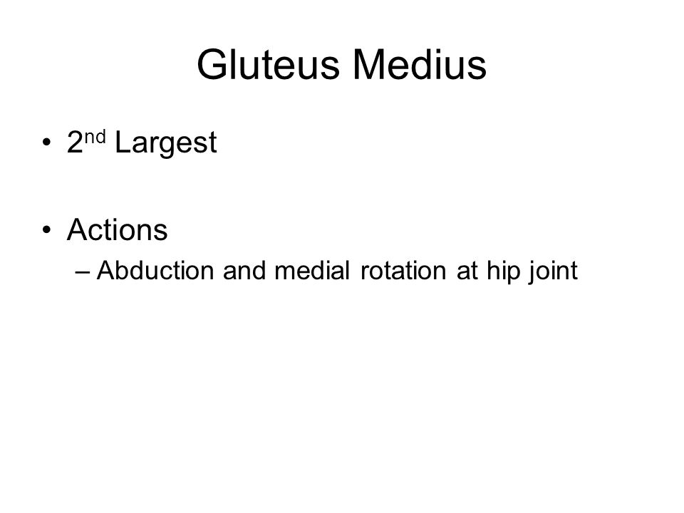 Gluteus Medius 2nd Largest Actions