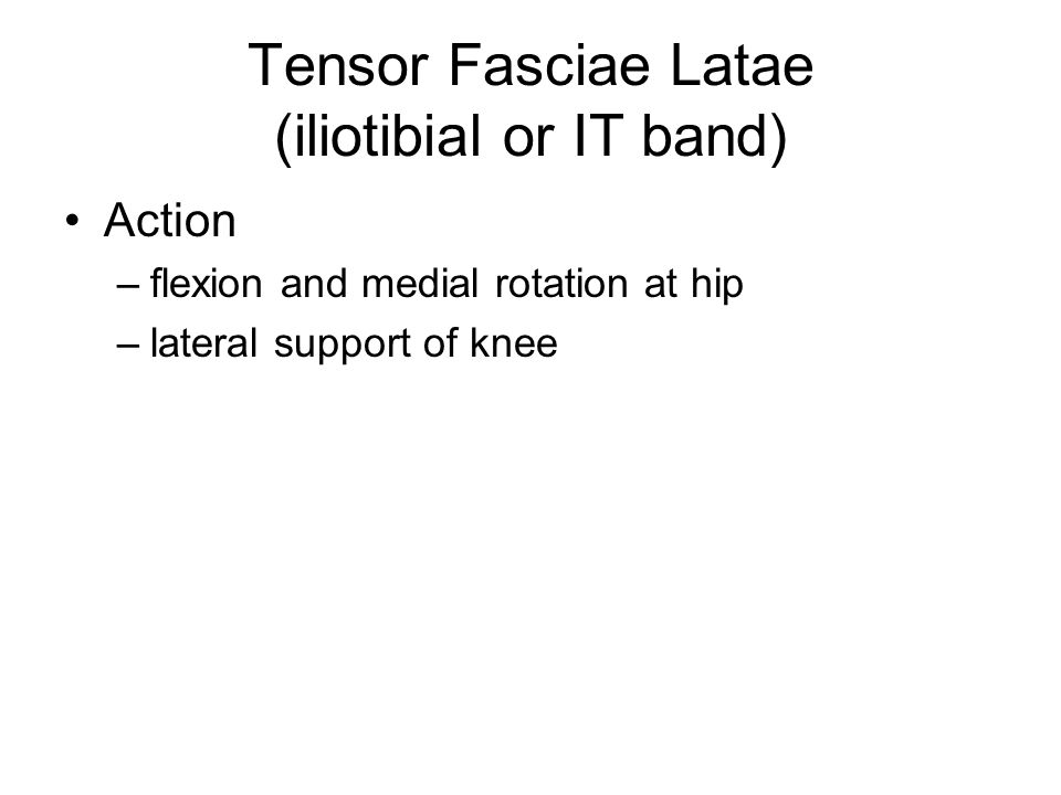 Tensor Fasciae Latae (iliotibial or IT band)