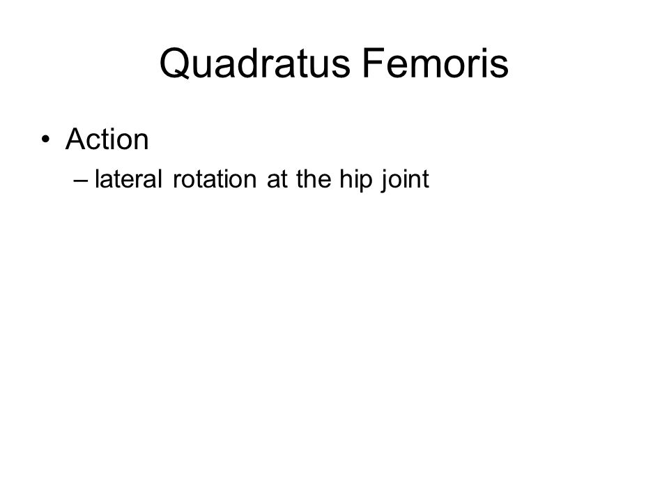 Quadratus Femoris Action lateral rotation at the hip joint