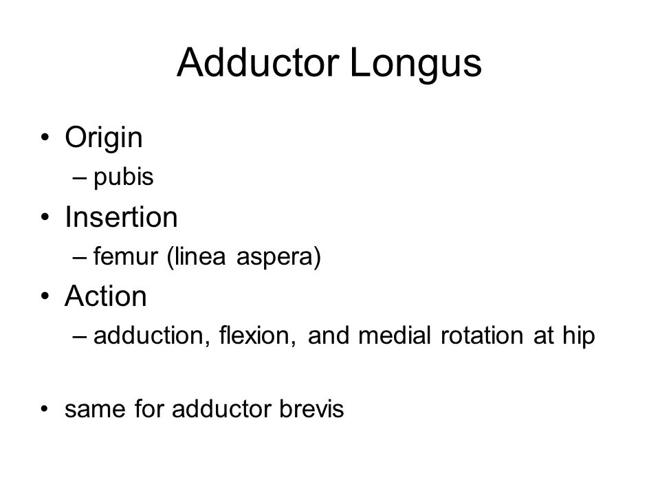 Adductor Longus Origin Insertion Action pubis femur (linea aspera)