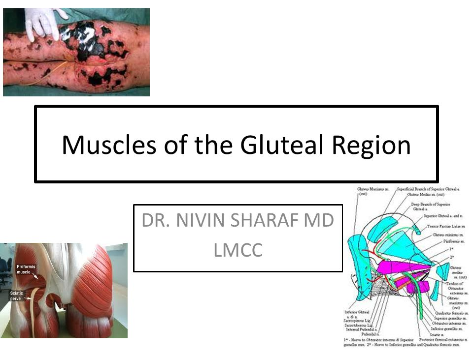 Muscles of the Gluteal Region