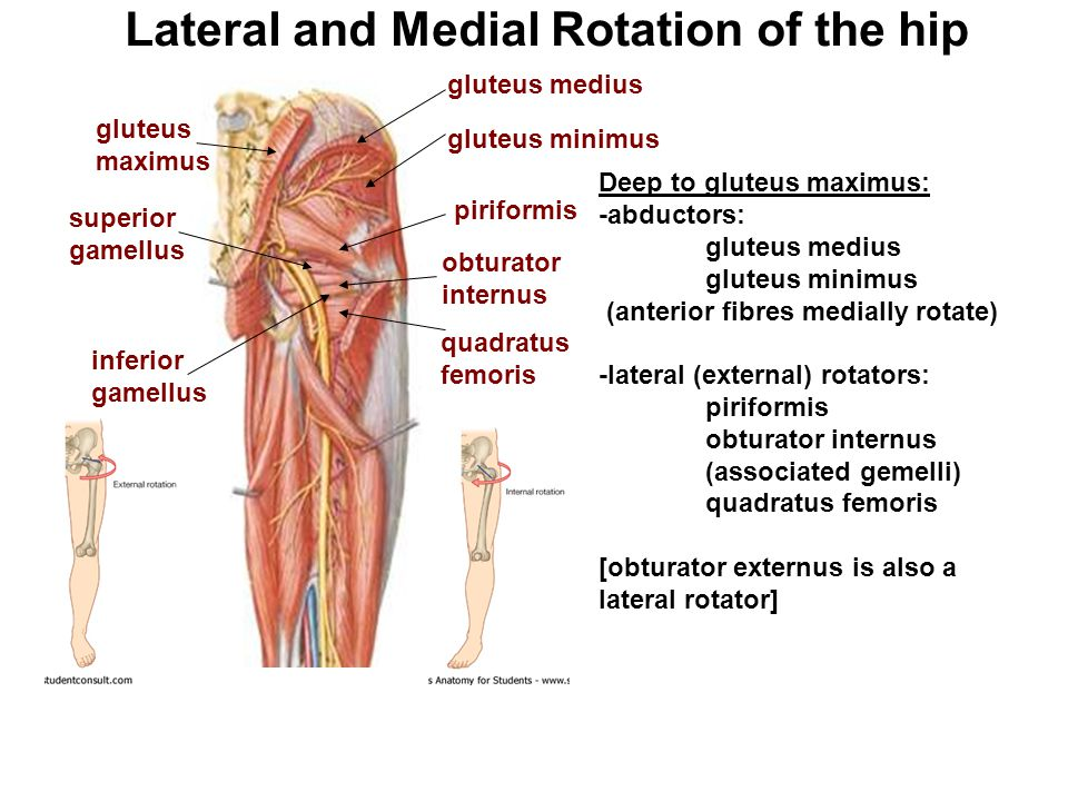 Lateral and Medial Rotation of the hip