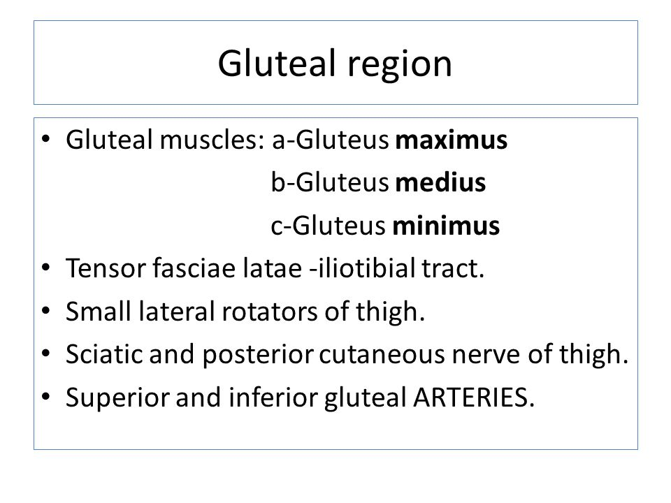 Gluteal region Gluteal muscles: a-Gluteus maximus b-Gluteus medius