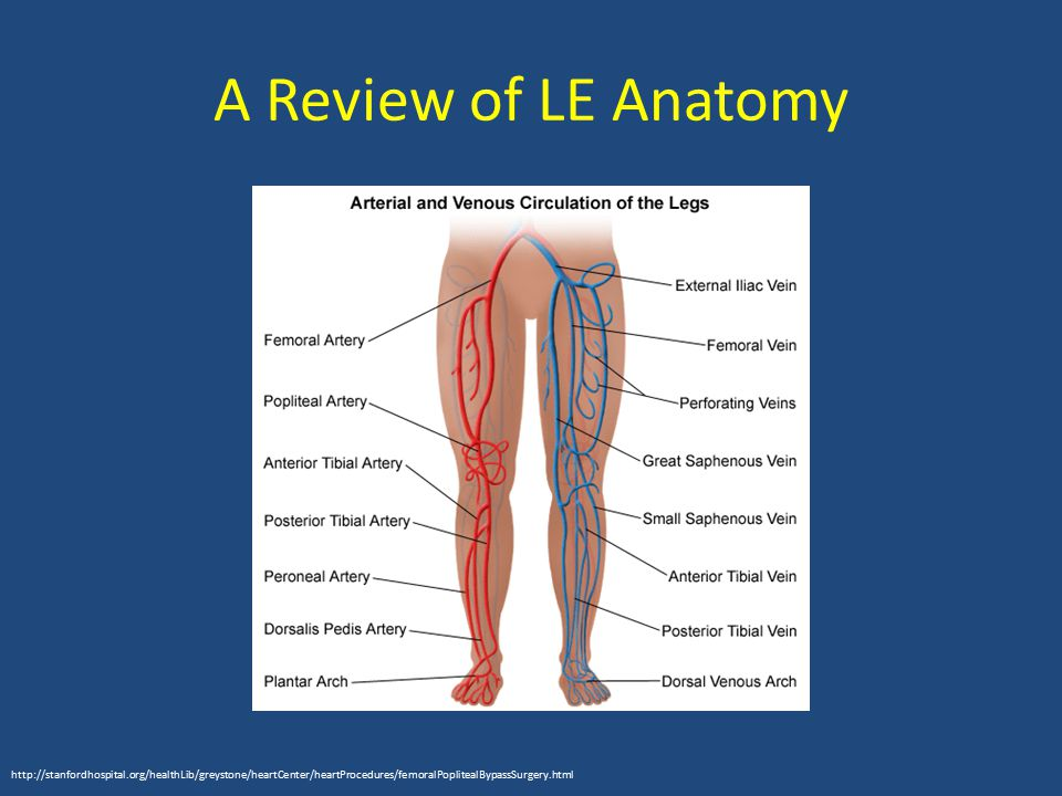 A Review of LE Anatomy http://stanfordhospital.org/healthLib/greystone/heartCenter/heartProcedures/femoralPoplitealBypassSurgery.html.