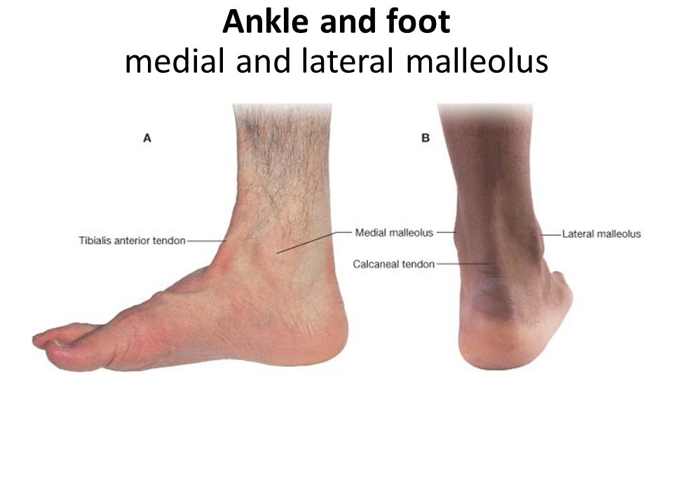 Ankle and foot medial and lateral malleolus