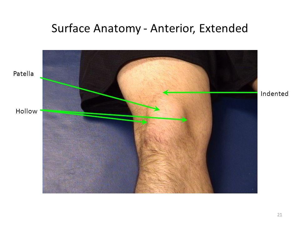 Surface Anatomy - Anterior, Extended