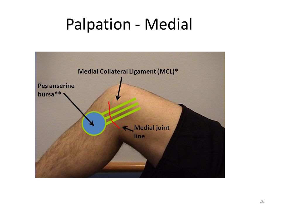 Palpation - Medial Medial Collateral Ligament (MCL)* Pes anserine