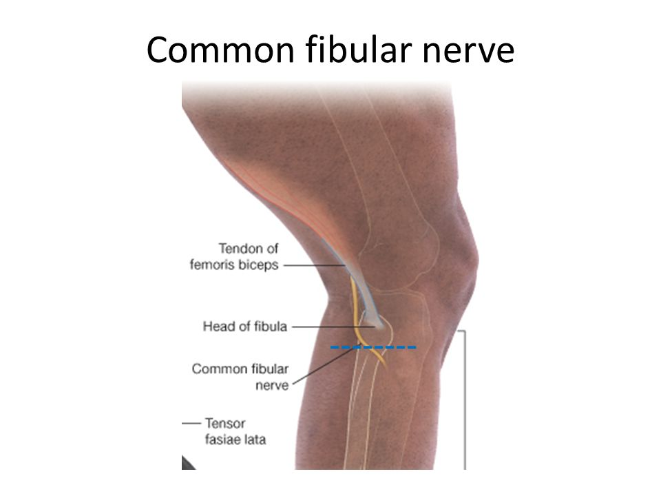 Common fibular nerve