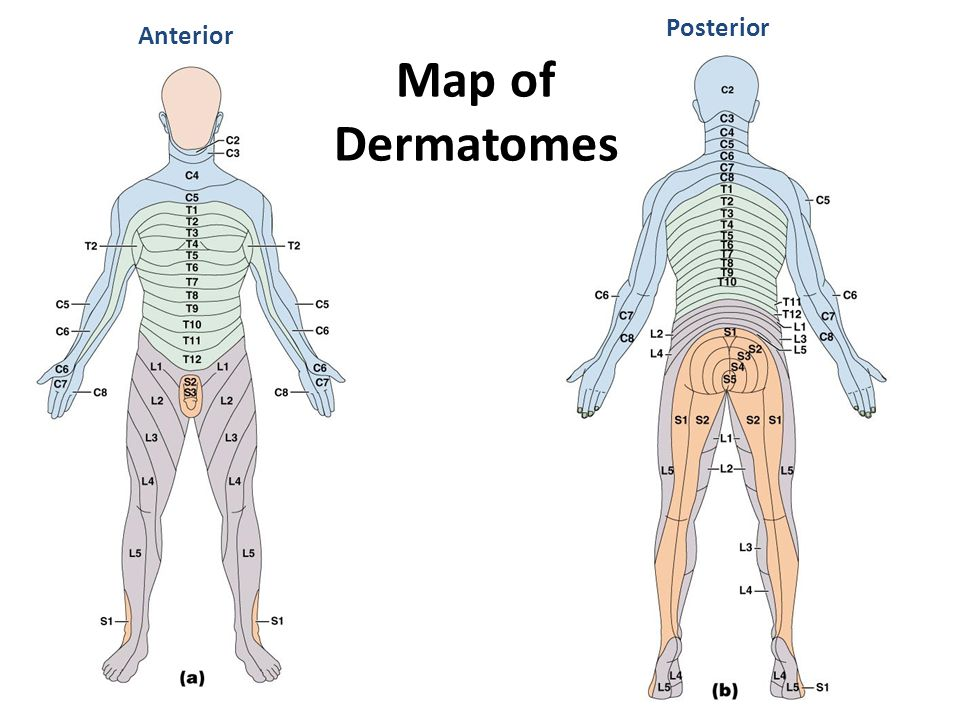 Posterior Anterior Map of Dermatomes