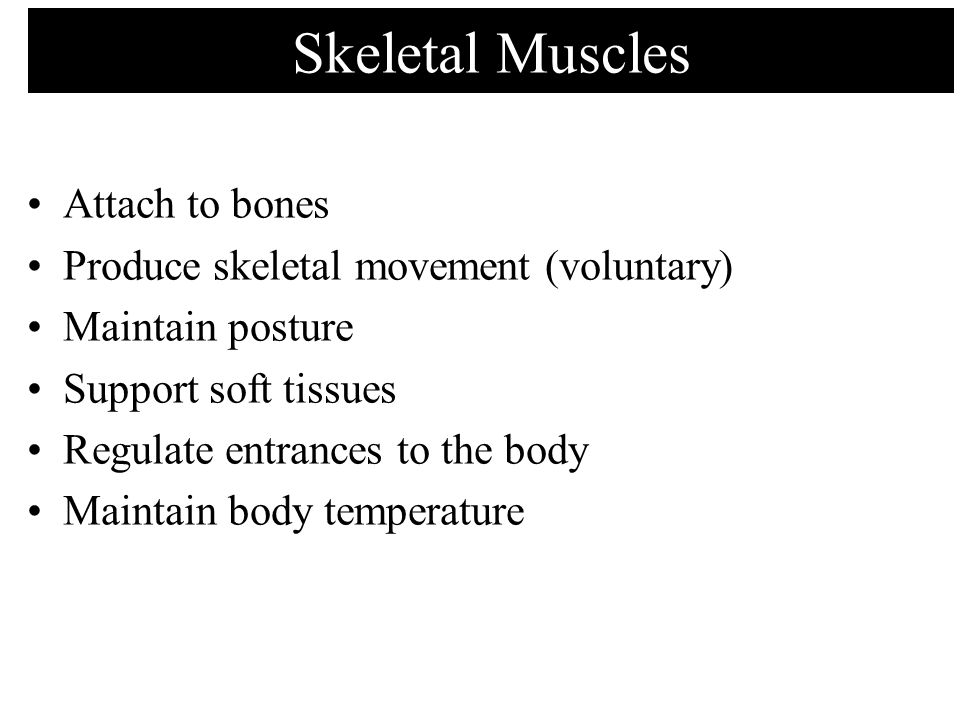 Skeletal Muscles Attach to bones Produce skeletal movement (voluntary)