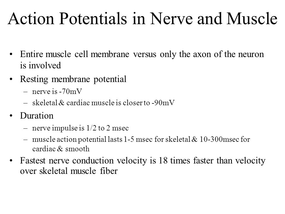 Action Potentials in Nerve and Muscle