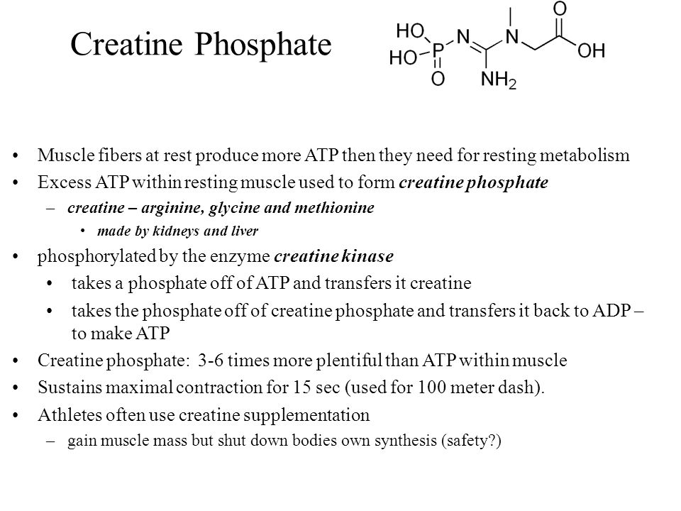 Creatine Phosphate Muscle fibers at rest produce more ATP then they need for resting metabolism.