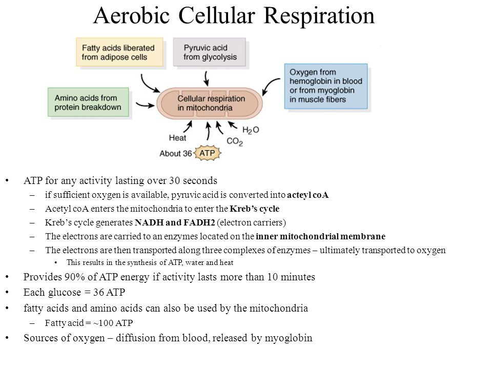 aerobic cellular respiration Difference between aerobic & anaerobic cellular respiration photosynthesis by david chandler updated april 24, 2017.