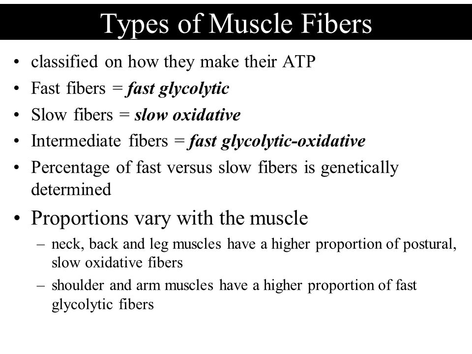 Types of Muscle Fibers Proportions vary with the muscle