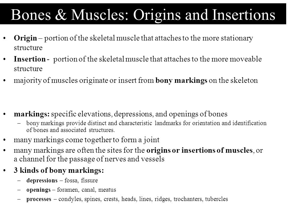 Bones & Muscles: Origins and Insertions
