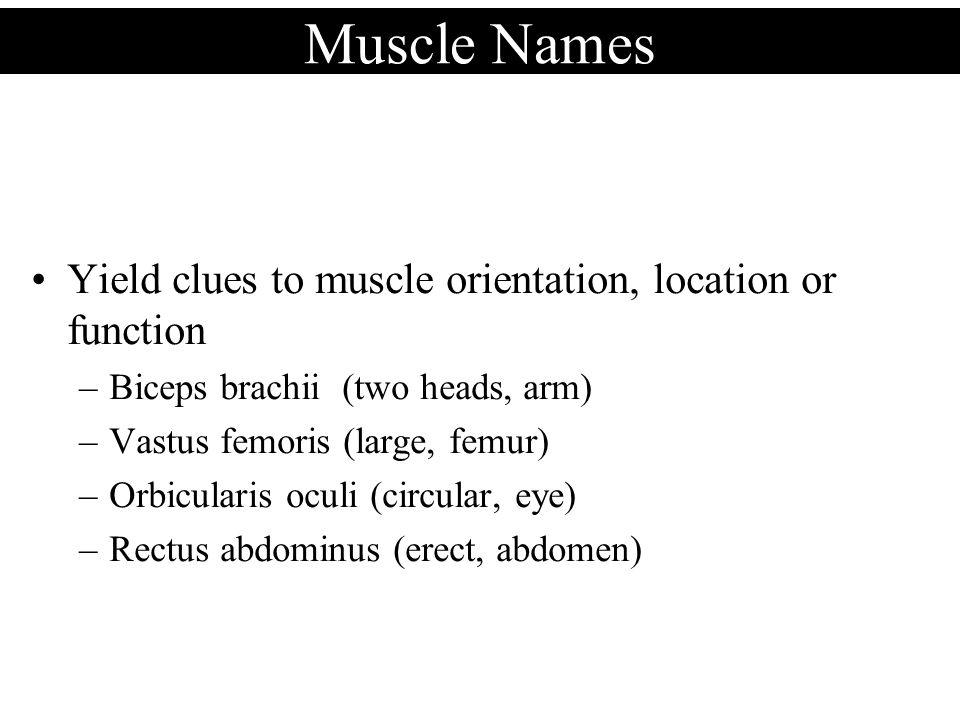 Muscle Names Yield clues to muscle orientation, location or function