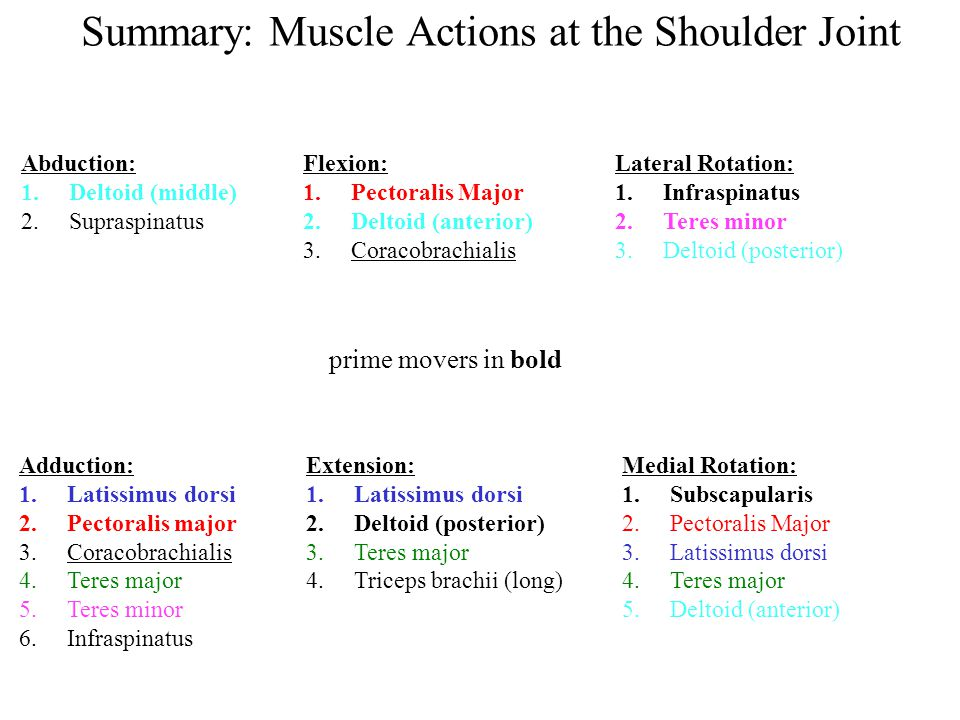 Summary: Muscle Actions at the Shoulder Joint