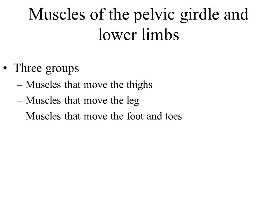 Muscles of the pelvic girdle and lower limbs