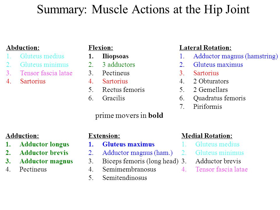 Summary: Muscle Actions at the Hip Joint