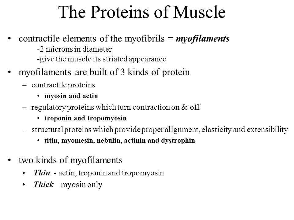 The Proteins of Muscle contractile elements of the myofibrils = myofilaments. -2 microns in diameter.