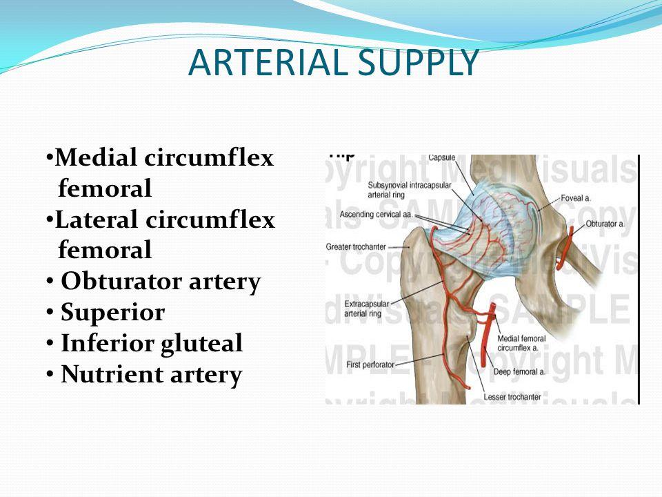 ARTERIAL SUPPLY Medial circumflex femoral Lateral circumflex
