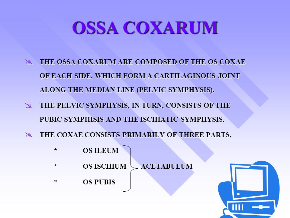 OSSA COXARUM THE OSSA COXARUM ARE COMPOSED OF THE OS COXAE OF EACH SIDE, WHICH FORM A CARTILAGINOUS JOINT ALONG THE MEDIAN LINE (PELVIC SYMPHYSIS).