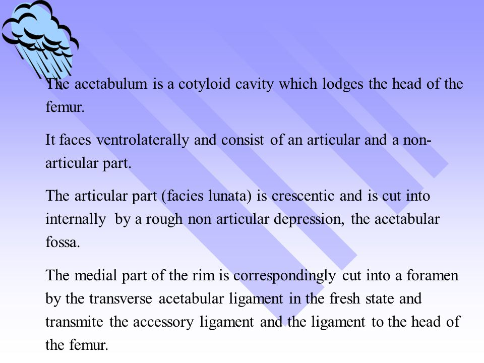 The acetabulum is a cotyloid cavity which lodges the head of the femur.