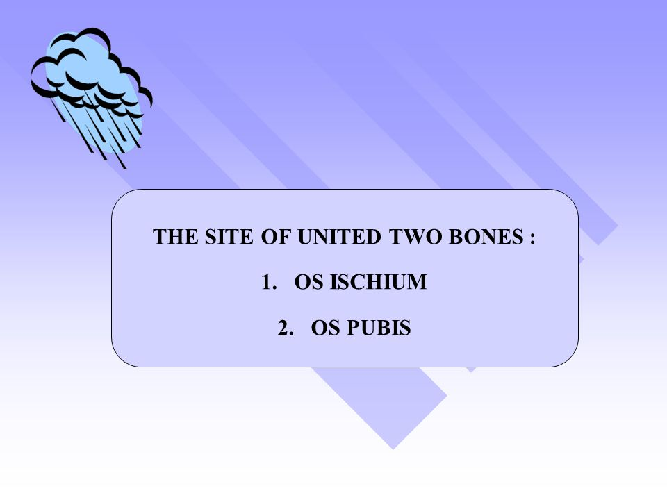 THE SITE OF UNITED TWO BONES :