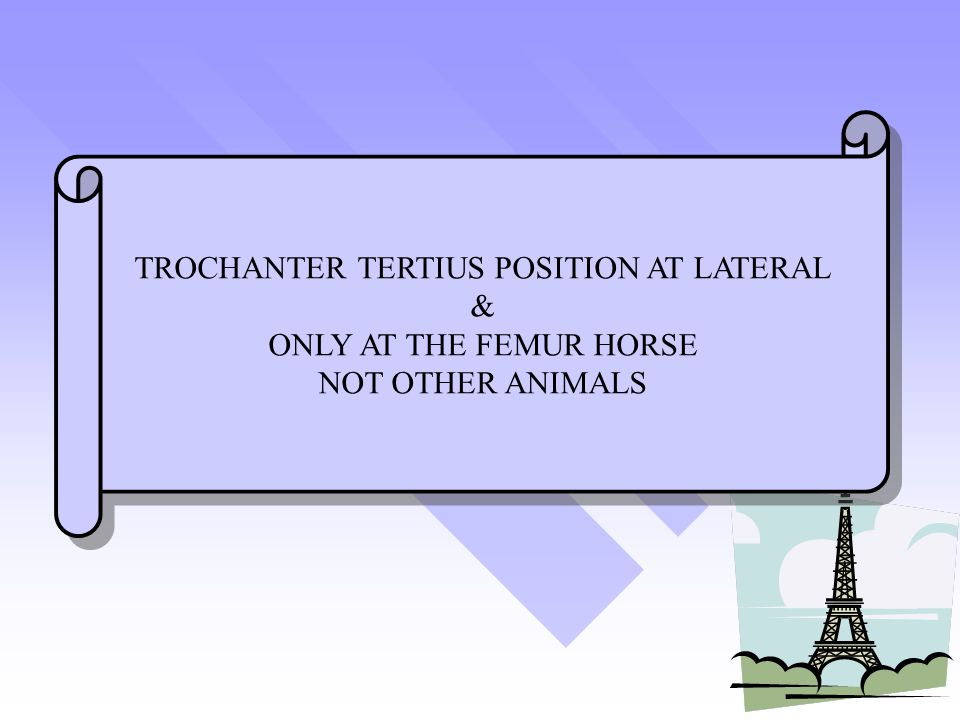 TROCHANTER TERTIUS POSITION AT LATERAL