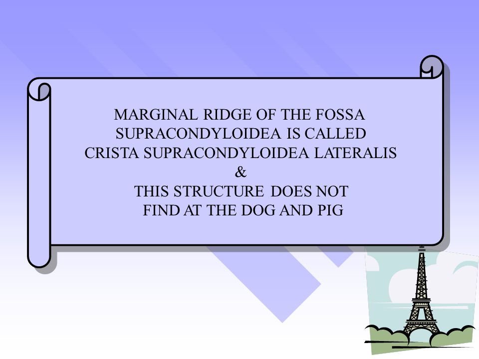MARGINAL RIDGE OF THE FOSSA SUPRACONDYLOIDEA IS CALLED
