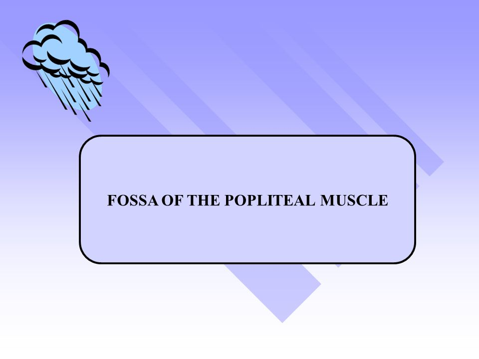 FOSSA OF THE POPLITEAL MUSCLE