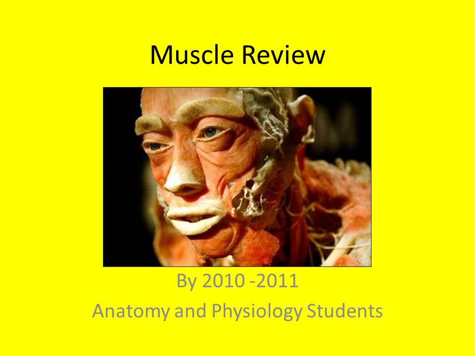 By 2010 -2011 Anatomy and Physiology Students