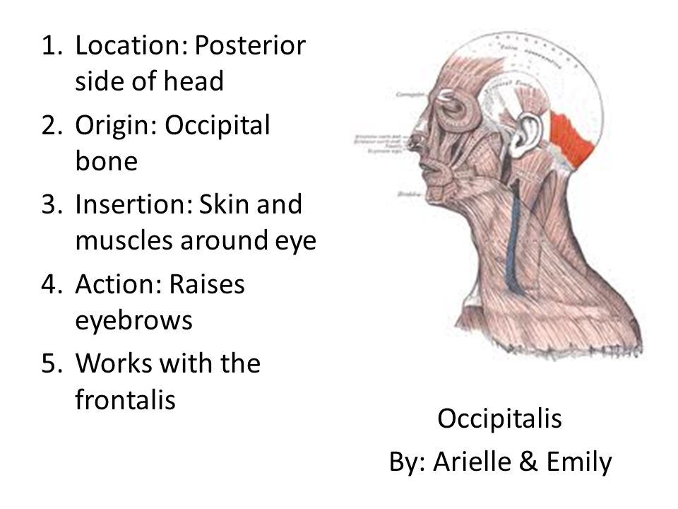 Location: Posterior side of head