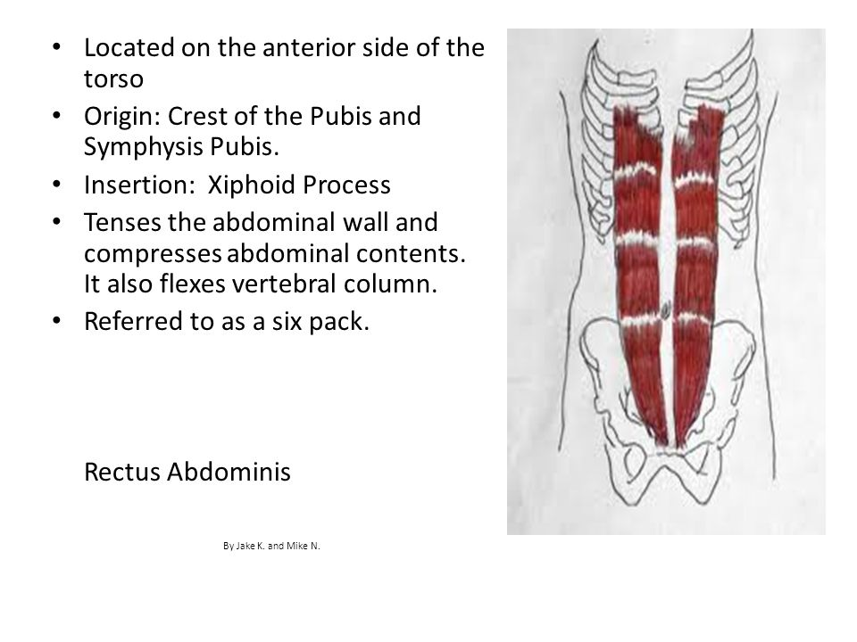 Located on the anterior side of the torso