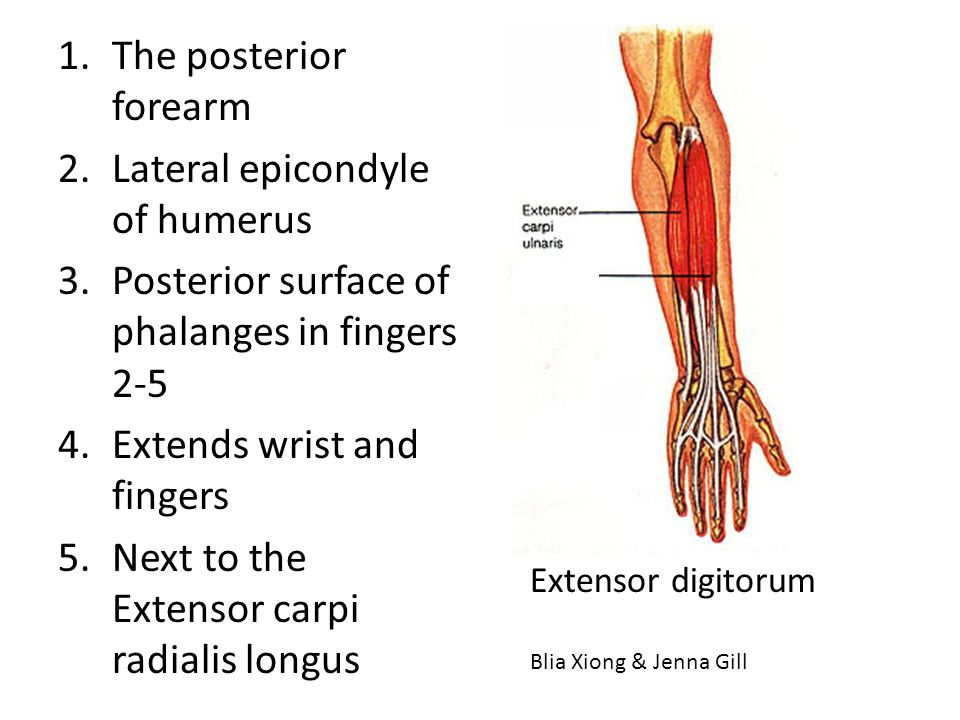 Lateral epicondyle of humerus