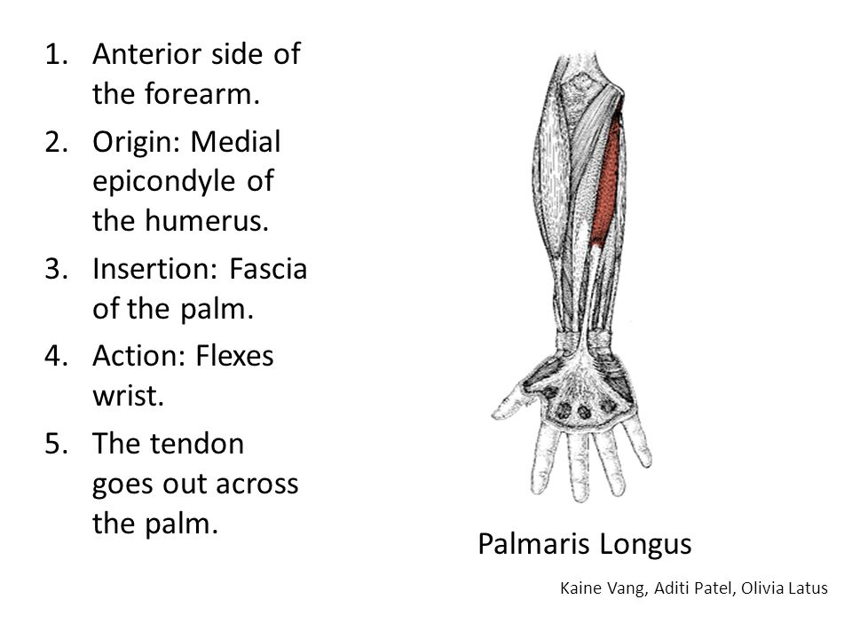 Anterior side of the forearm.