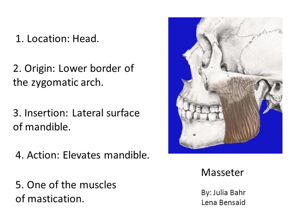 2. Origin: Lower border of the zygomatic arch.